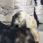 polar bear in NM!