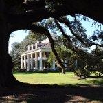 Live Oaks and Houmas Plantation House