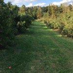 Stepp's Hillcrest Orchard Foto