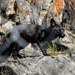 Yukon Wildlife and Preserve