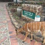 Photo de Zulu Nyala Heritage Safari Lodge