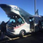 Free shark shuttle