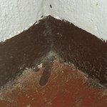 Gecko Lodge-bild