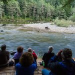 Watching bears eating salmon from one of our platforms.
