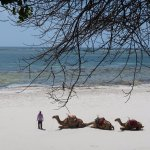 Baobab Beach Resort & Spa Foto