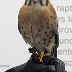 Meet Bob (and his friends) at the World Canter for Birds of Prey
