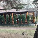 Bilde fra Cafe Sosnovaya Gorka
