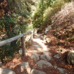 Trail to redwood forest