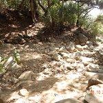 Crossing the creek trail