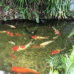 Koi Pond at entrance to 15th Stree Fisheries