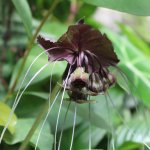 Photo de The Butterfly and Orchid Garden