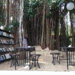 The beautiful 150 year old Banyan Tree