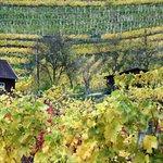 The Wachau Wine Region
