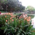 Цветущие канны у набережной озера