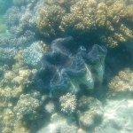 Foto de Ocean Safari