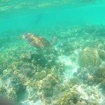 Photo of Ocean Safari