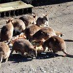 Oshima Park Foto