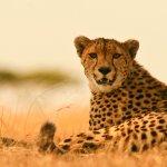 Wayo Africa Foto