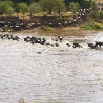 صورة فوتوغرافية لـ Wayo Africa