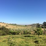 Fynbos Estate照片