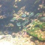 Photo of Kushimoto Marine Park Aquarium