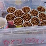 ウグイの餌、1カップ100円