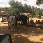 Chevaux arabes dans l'oasis