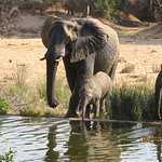 Elephants and other animals often drink at the pool near the deck