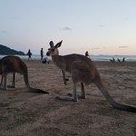 Cape Hillsborough Nature Tourist Park Foto