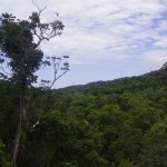 More tropical forest