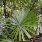 Magnificent tropical fern
