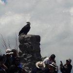 Condor Park Foto