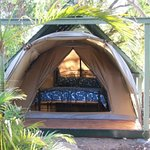 Sleep amongst nature in our Safari Tents!