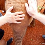 Foto de David Sheldrick Wildlife Trust
