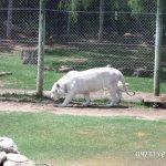 Cango Wildlife Ranch Foto