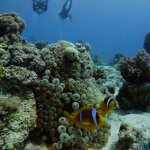 Photo from diving September 22 2017 with the dive centre in the Oasis Dive Resort.