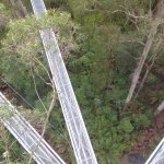 Otway Fly paths from the tower