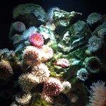 Ozeaneum Foto