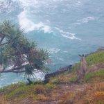 Kangaroo overlooking North Gorge