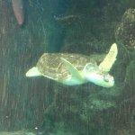 Foto di Oceanarium
