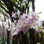 Les magnifiques orchidées de Dada et sa super déco d'anniversaire :)