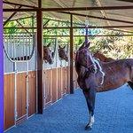 Turka in the New Barn