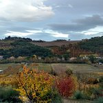 Bild från Tuscan Wine Tours by Grape Tours
