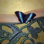 Casa delle Farfalle e Bosco delle Fate di Butterfly Arc Foto