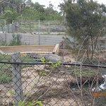 Photo of Koorana Crocodile Farm
