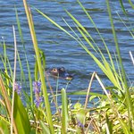 Foto de Ritch Grissom Memorial Wetlands