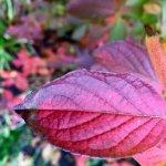 Zdjęcie The Botanical Gardens
