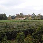 Foto de Charleston Tea Plantation