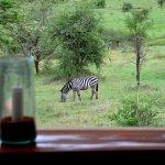 Mara Bushtops Foto