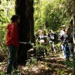 Una caminata en el sendero, aprender del bosque y nuestra fauna. Que hermoso el cantar de las av